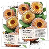 Seed Needs, Pink Surprise Calendula (Calendula officinalis) Twin Pack of 500 Seeds Each