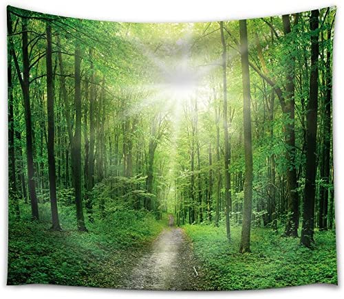 Big Bright Sun Illuminating a Path That Leads to a Forest