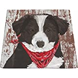 Paperproducts Design 603156 Small Square Plate Featuring Melvin Design, Black/White