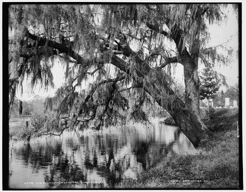 Photo  Live Oak Magnolia Cemetery Charleston South Carolina Sc Detroit Publishing 1890