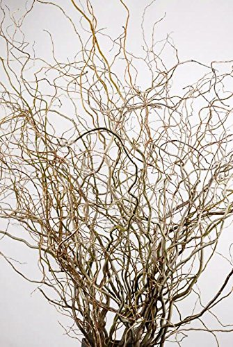 Richland Natural Curly Willow Branches 36
