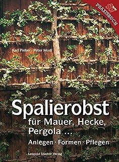 Begrünte Wände, Lauben Und Pergolen: Gestalten Mit Kletterpflanzen ... Pergola Bepflanzen Kletterpflanzen