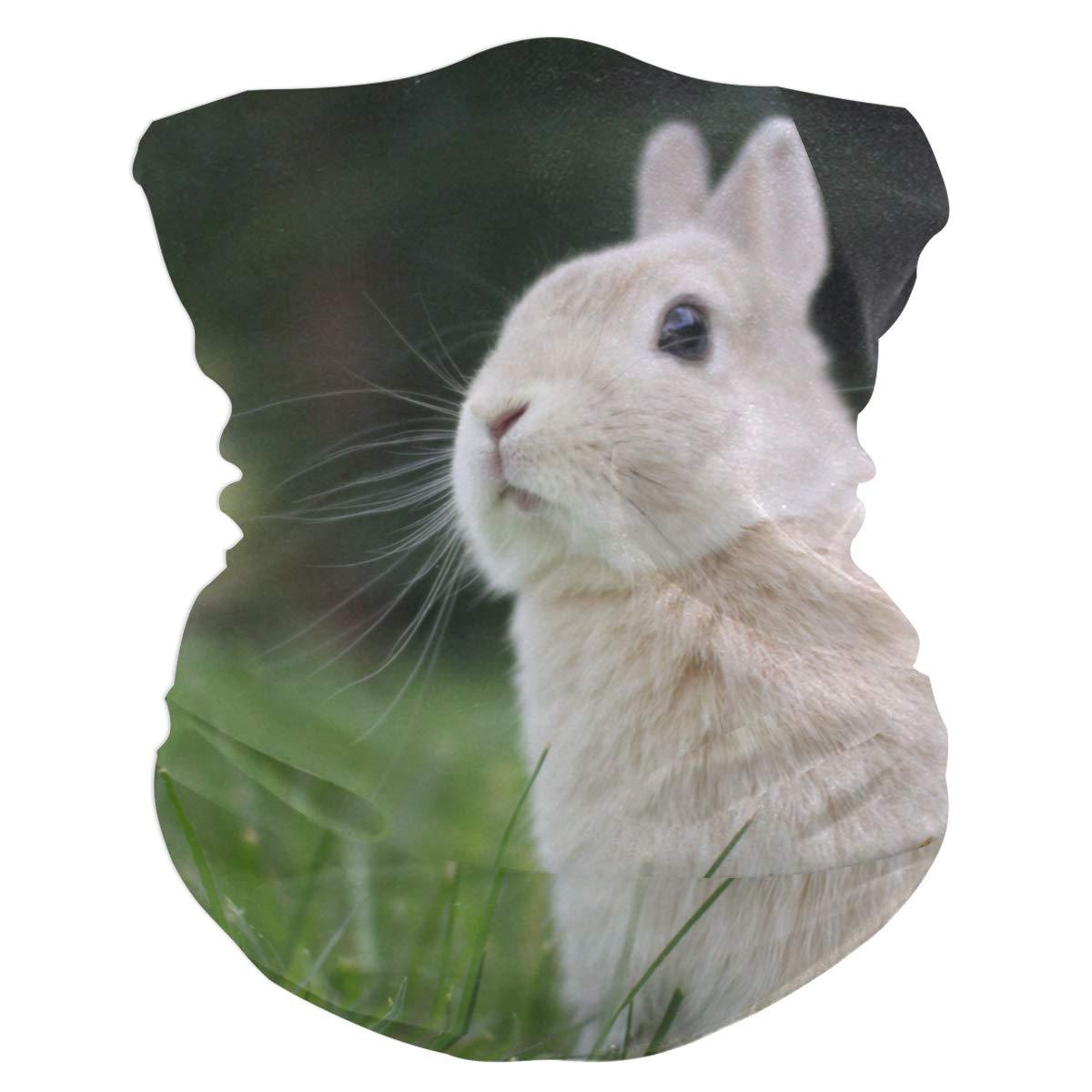 Rabbit Headband Bandana...