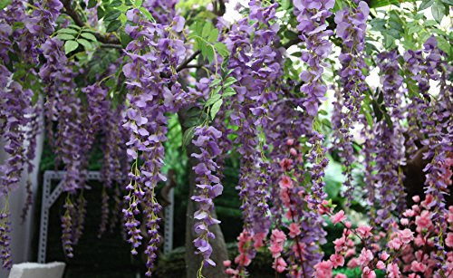 Bird-Fiy-12-Pieces-Artificial-Silk-Wisteria-Vine-Ratta-Silk-Hanging-Flower-Wedding-Dcor-36-Feet