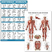QuickFit Bodyweight Workouts and Muscular System Anatomy Poster Set - Laminated 2 Chart Set - Body Weight Exer