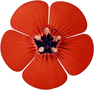 product image for Next Innovations Orange 5 Petal Flower Wall Art