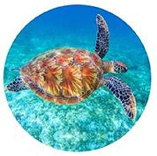 product image for Turtle 24 inch Round Wall Art