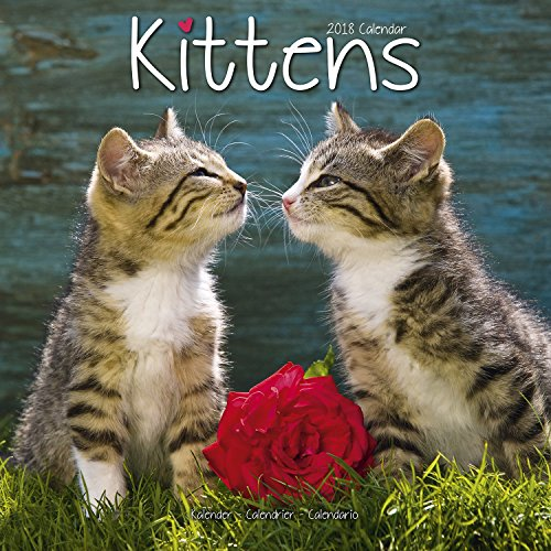 Price comparison product image Cute Kitten Calendar - Calendars 2017 - 2018 Wall Calendars - Animal Calendar - Kittens 16 Month Wall Calendar by Avonside Studio