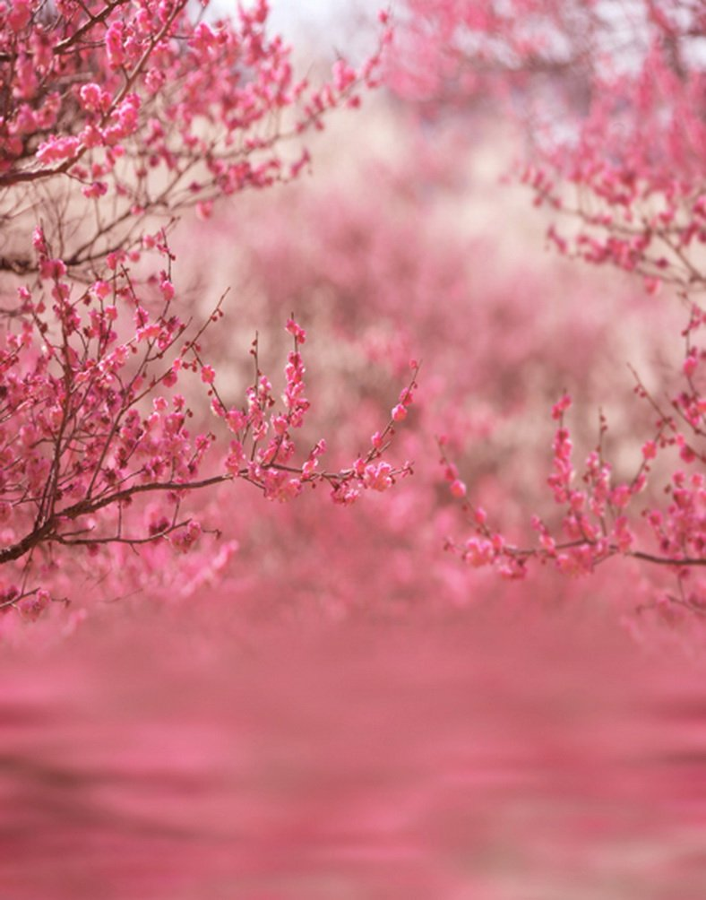 5 x 7ftピンク花ツリー写真背景computer-printedビニールBackdrops   B01J5IBZFQ
