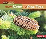 From Cone to Pine Tree (Start to Finish)