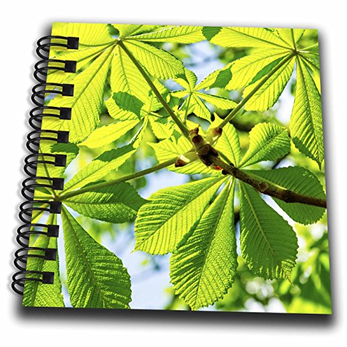 3dRose Alexis Photography - Nature Plants - Fresh Green Sunlit Leaves of a Chestnut Tree in Spring - Mini Notepad 4 x 4 inch (db_281199_3) (Chestnut Album)