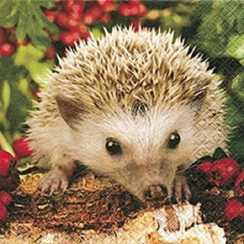 4 x Paper Napkins - Hedgehog - Ideal For Decoupage / Napkin Art Ambiente
