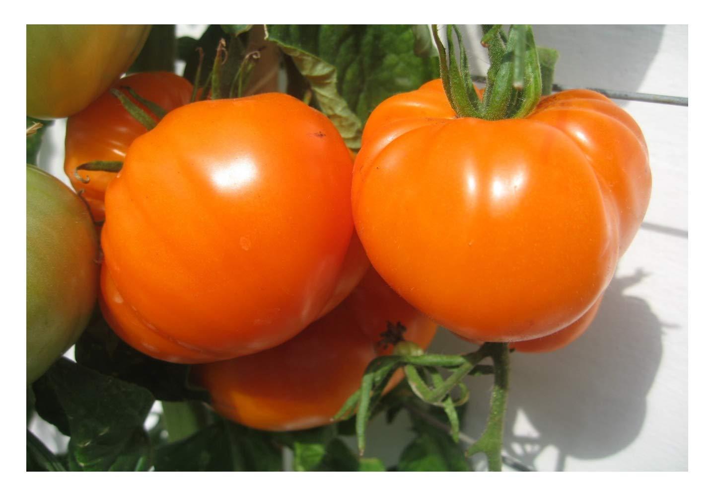 Tomato Orange Strawberry German: a description of the variety, reviews