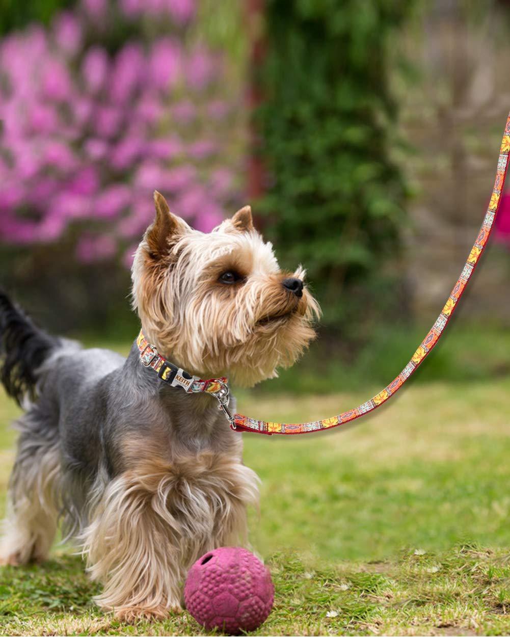 Collari Personalizzati e 1.5m Guinzagli per Cani di Taglia Piccola Rosa Fibbia a Sgancio Rapido Incisa con Nome e Numero Taglory Set Collare Guinzaglio