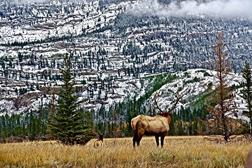 Home Comforts LAMINATED POSTER Elk Rockies Wilderness Scenery Nature Mountains Poster 24x16 Adhesive Decal