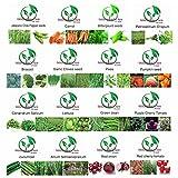 Golden autumn farm- Organic vegetable seeds set -16/ ORGANIC NON-GMO Easy-to-Grow vegetable Seeds