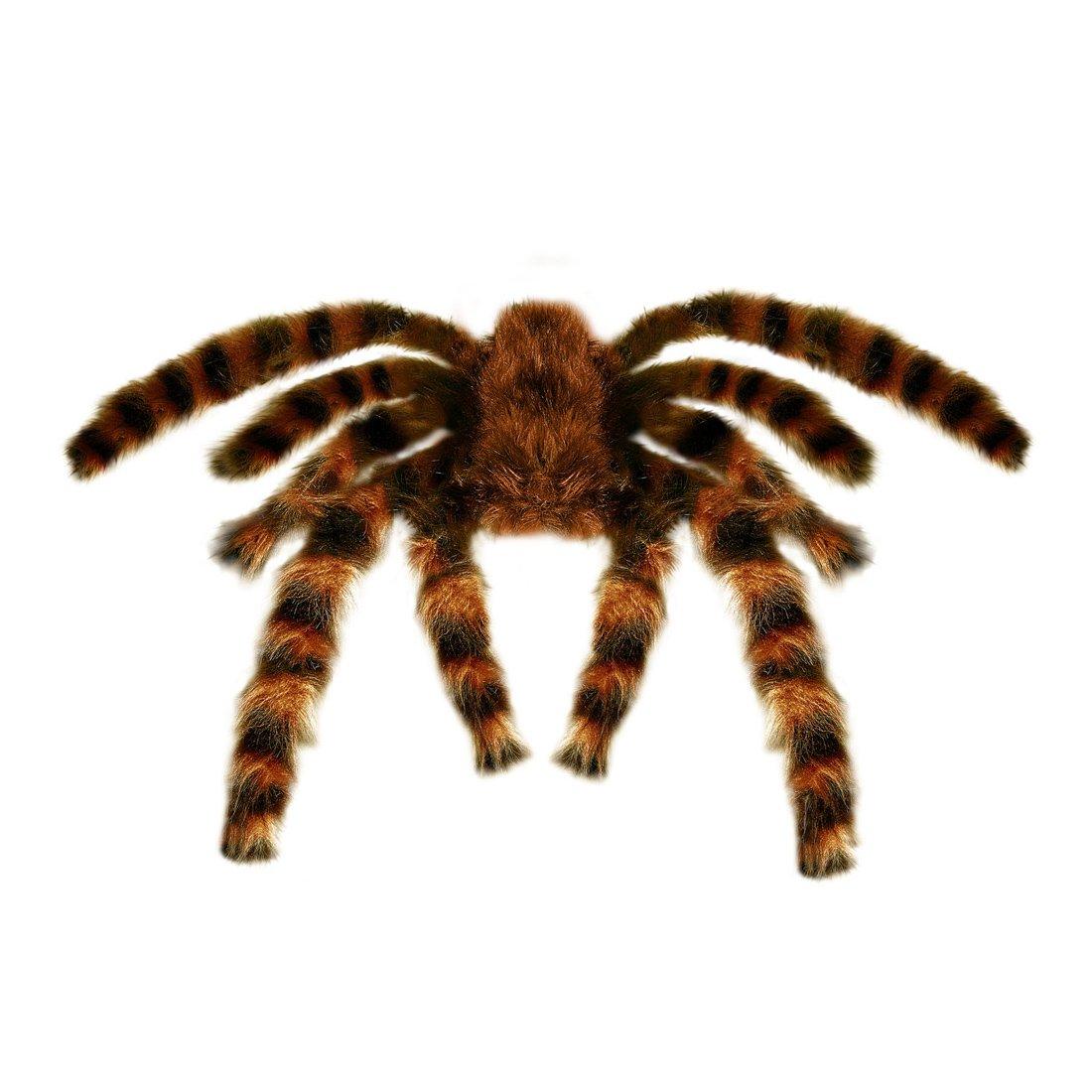 Amakando Déco araignée Halloween Mygale poilue géante 75 cm Tarentule décorative fête d'horreur Accessoire soirée à thème effroi décoration migale Ornement de fête Jungle