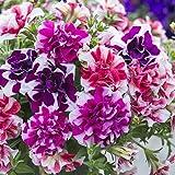 Tumbelina Ruffles Hanging Mix 150 Petunia Seeds Upc 643451296068