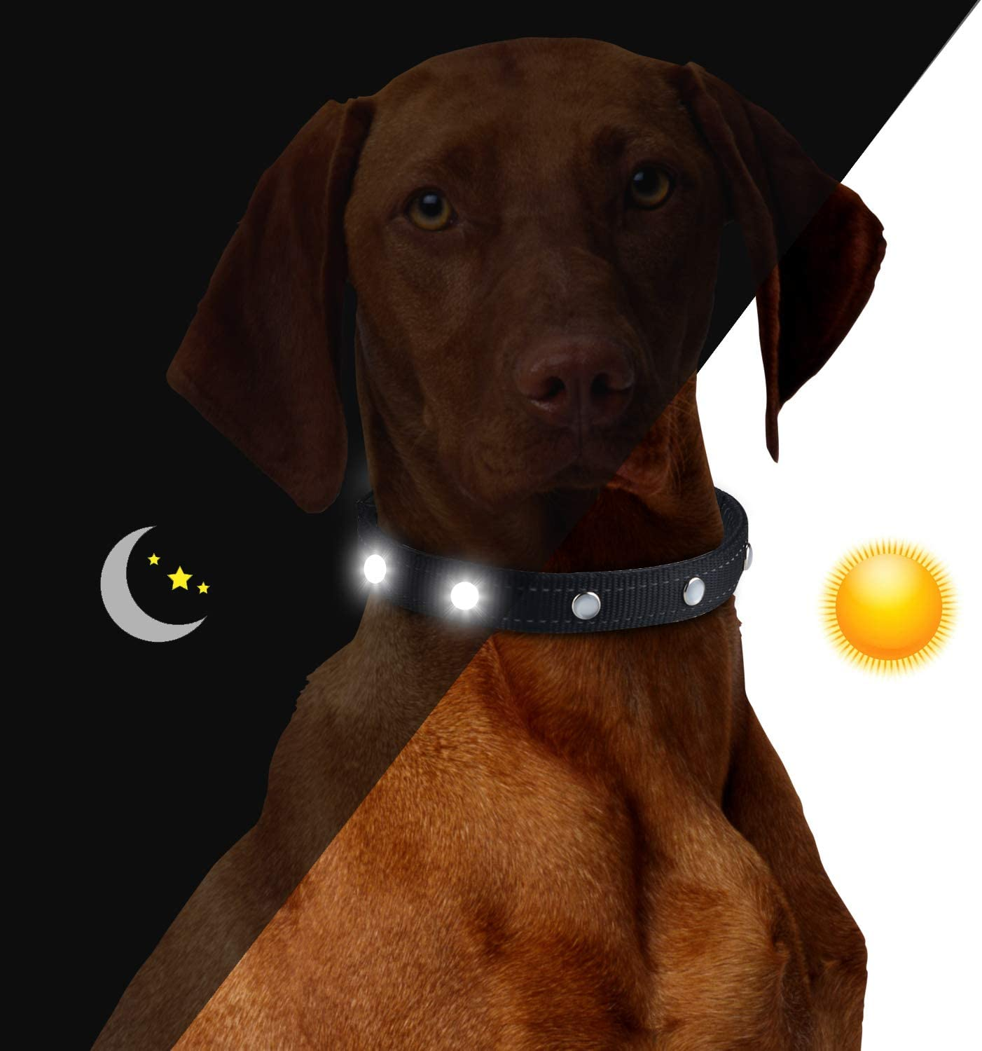 HEZe LED Dog Collar – USB Rechargeable – Available in Makes Your Dog Visible Safe