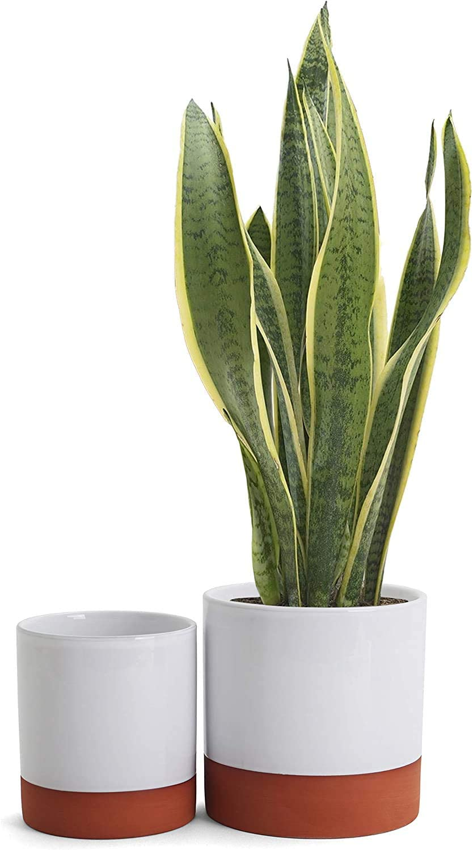 Belari Terracotta Planter Set