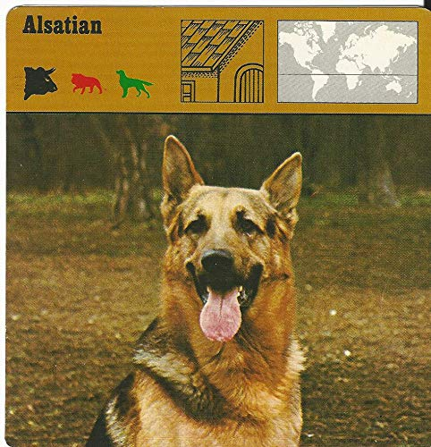 1975 Editions Rencontre, Animals Card, 08.174 Alsatian, Dog