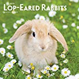 Lop Eared Rabbits 2019 12 x 12 Inch Monthly Square Wall Calendar, Domestic Small Pets Animals (Multilingual Edition)