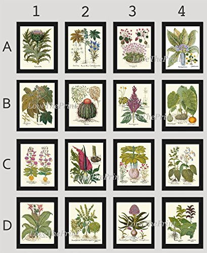 Flower Print Set of 16 Wall Art Antique Beautiful Botanical Thistle Cyclamen Amarantus Hyacinth Cactus Lily Dracontium Elephant Ears Colocasia Tropical Garden Home Decor Unframed - Cyclamen Color Is What