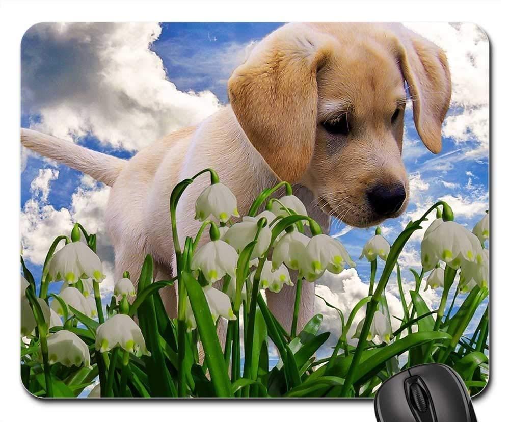 犬マウスパッド 1120-003 260*210*3 mm B07KPVFBMG Fl17 300*250*3 mm 300*250*3 mm|Fl17