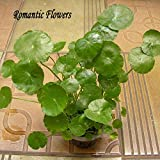100 Particles / Bag Water Plants Seeds Raw Culture Horseshoe Gold Coins Grass Species Four Seasons Germinate Easily Potted