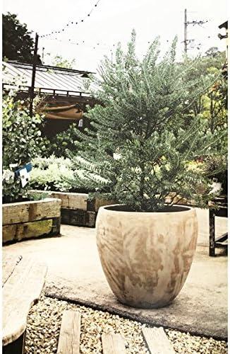 テラコッタ製 植木鉢 フレーム ラウンド トープ 39cm 大型植木鉢