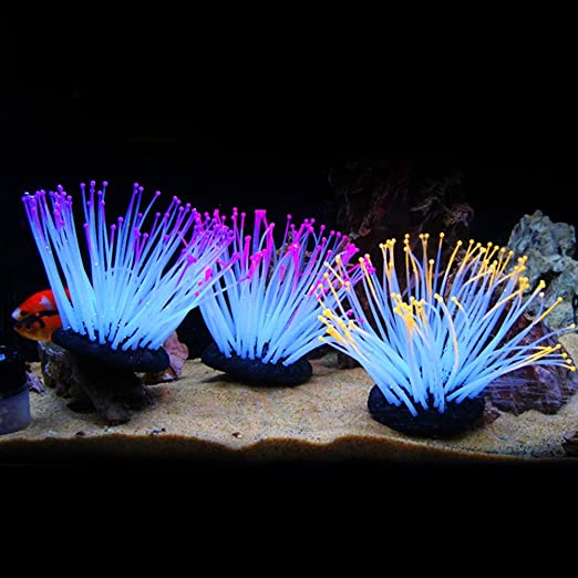 Anémonas luminosas artificiales de silicona de varios colores para decoración de acuario de Zhi Jin: Amazon.es: Productos para mascotas