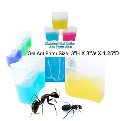 eco toys Yellow Gel Ant Farm (1) Reality Show 24/7 365: Toys & Games