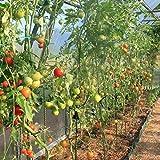 GALEN Eco-Friendly Fiberglass Garden Stakes, Tomato Stakes, Plant Stakes