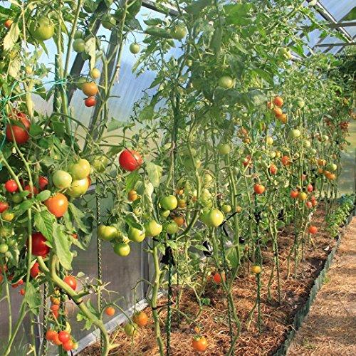 GALEN Fiberglass 3' Garden Stakes, Tomato Stakes, Plant Stakes, Pack of 20