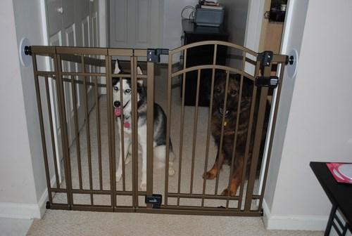 Extra Tall Decorative Walk thru Gate Metal Dog Child Safety