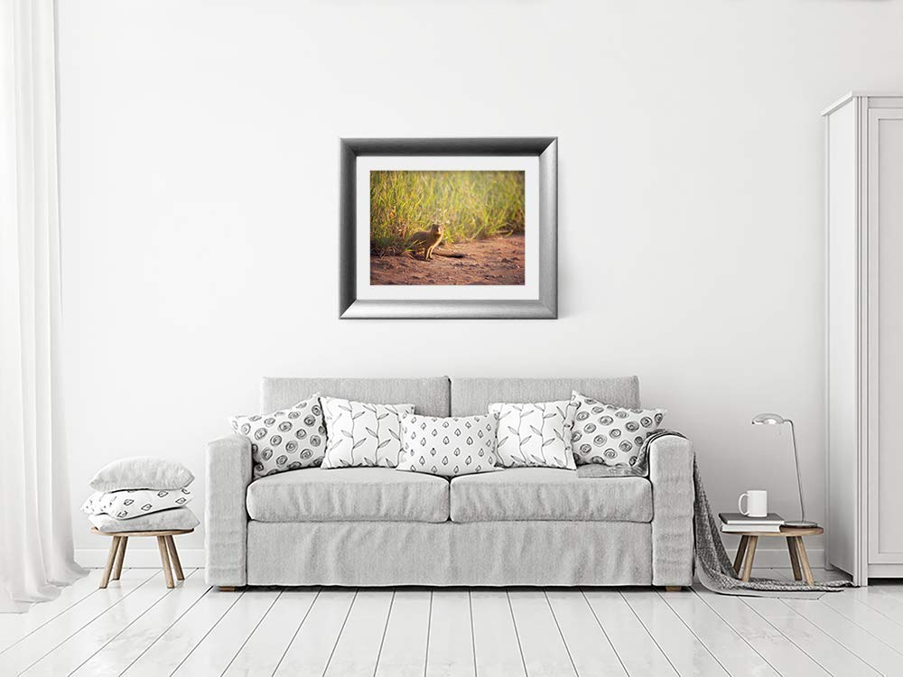 Mongoose - Wildlife Photograph Animal Picture Home Decor Wall Nature Print - Variety of Size Available by Whimsical Wild Artwork (Image #7)