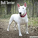 Bull Terrier Calendar - Dog Breed Calendars - 2017 - 2018 wall Calendars - 16 Month by Avonside