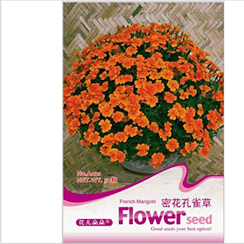 French Marigold Seed,flowers Maidenhair,original Package Seed About 50 Particles