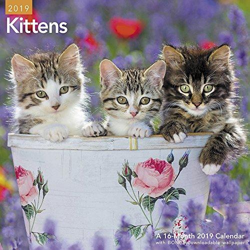 Kittens Wall Calendar - Kittens Wall Calendar (2019)