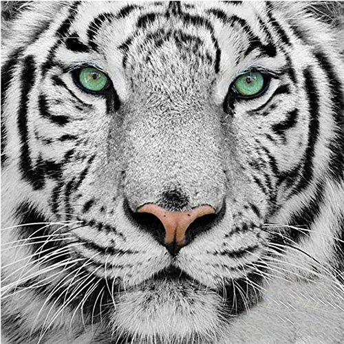 Adarl 5D DIY Full Diamond Painting Rhinestone Pictures of Crystals Embroidery Kits Arts, Crafts & Sewing Cross Stitch (Tiger 1) ()