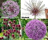 Allium Lover's Mix~20 Bulbs~4 DIFFERENT TYPES! 2 Gladiator, 3 Schubertii, 3 Christophii & 12 Drumsticks
