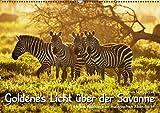 GOLDENES LICHT ÜBER DER SAVANNE. - Author: Skrzypczak Uwe
