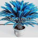 100pcs/bag blue Cycas seeds, Sago Palm Tree seeds.bonsai flower seeds,the budding rate 97% rare potted plant for home garden