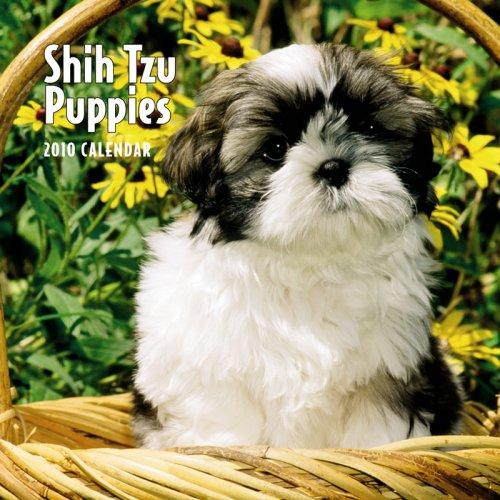 Shih Tzu Puppies 2010 Mini (Shih Tzu 2010 Calendar)