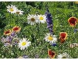 All Perennial Wildflower Mix Seeds Flower Easy Grow 6 (2500 Seeds, 1/8 oz)