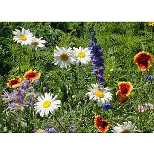 Image of All Perennial Wildflower Mix Seeds Flower Easy Grow ST6 (1.8 Million Seeds, or 5 LB)