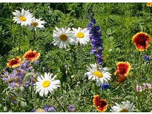 All Perennial Wildflower Mix Seeds Flower Easy Grow ST6 (600 Seeds, 1 Gram)