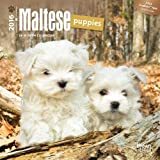 By Browntrout Publishers - Maltese Puppies 2016 Mini 7x7 (Multilingual Edition) (Min) (2015-07-30) [Calendar]