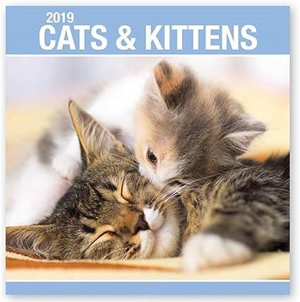 2019 gatos gatitos perros cachorros cachorro lindo cuadrado pared calendario Navidad regalo: Amazon.es: Oficina y papelería