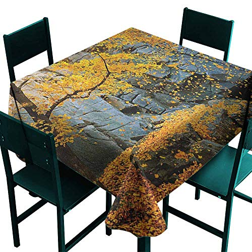 Warm Family Leaves Fabric Dust-Proof Table Cover Canadian Maple Trees Falling Leaves Down Surrounded by Scenic Rocks Stones Foliage for Kitchen Dinning Tabletop Decoration W36 x L36 Grey Orange